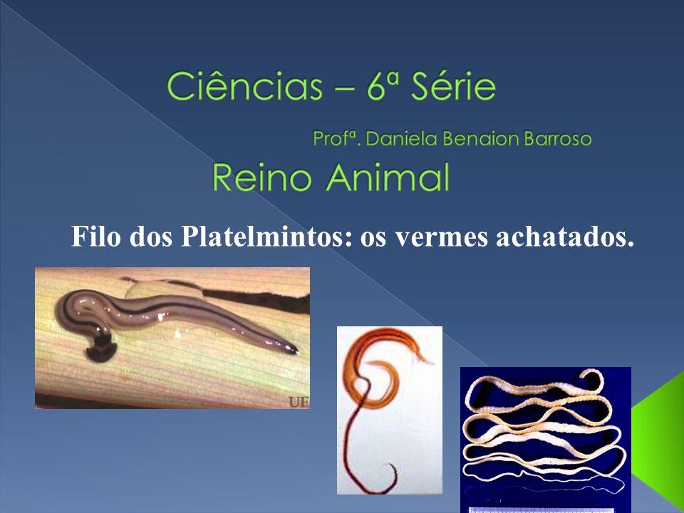 Filo dos Platelmintos: os vermes achatados.