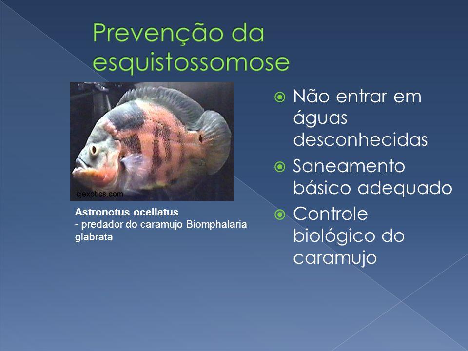 Não entrar em águas desconhecidas Saneamento básico adequado Controle biológico do caramujo Astronotus ocellatus - predador do caramujo Biomphalaria g