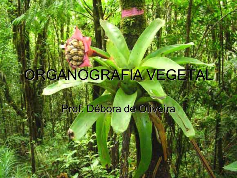 ORGANOGRAFIA VEGETAL Prof. Débora de OIiveira