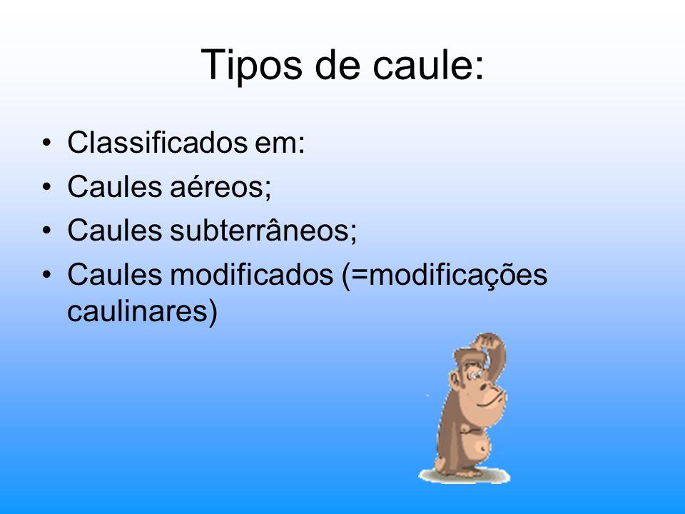 Tipos de caule: Classificados em: Caules aéreos; Caules subterrâneos; Caules modificados (=modificações caulinares)