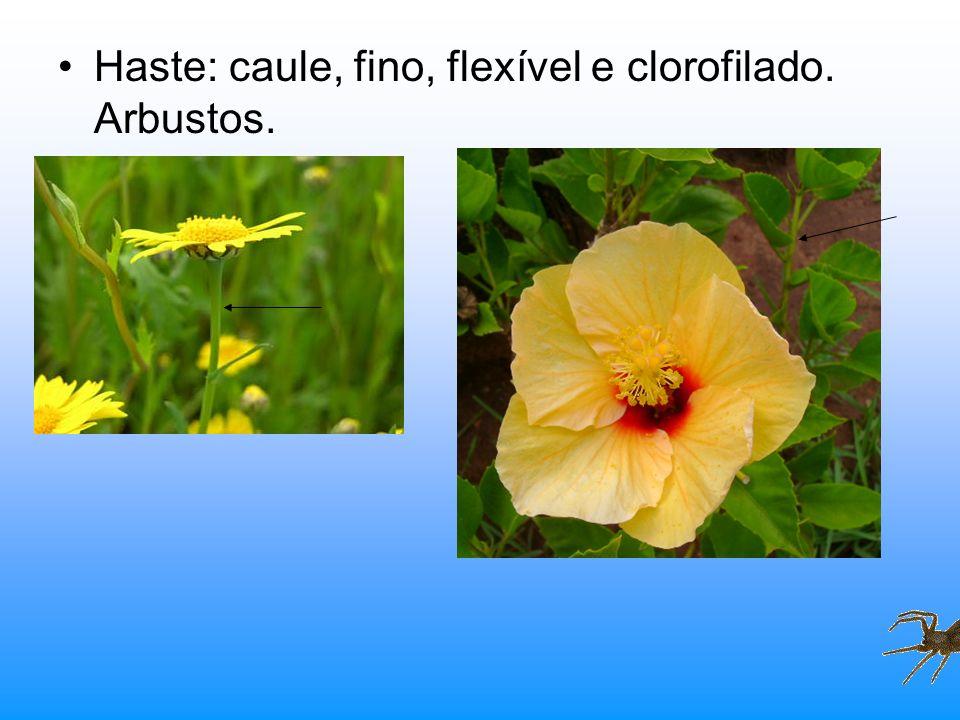 Haste: caule, fino, flexível e clorofilado. Arbustos.
