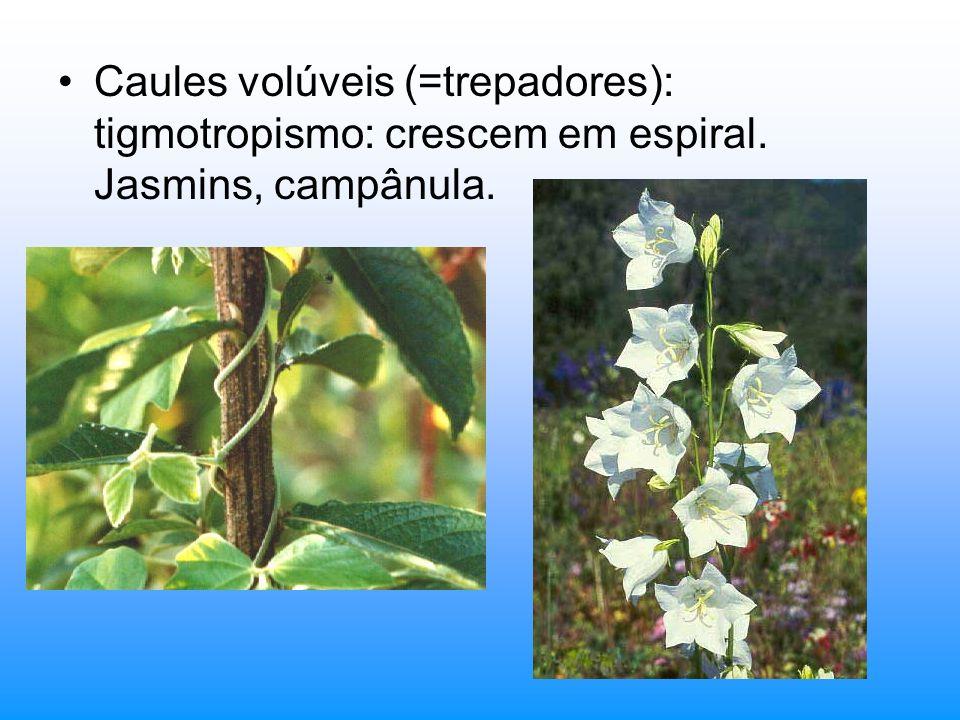 Caules volúveis (=trepadores): tigmotropismo: crescem em espiral. Jasmins, campânula.