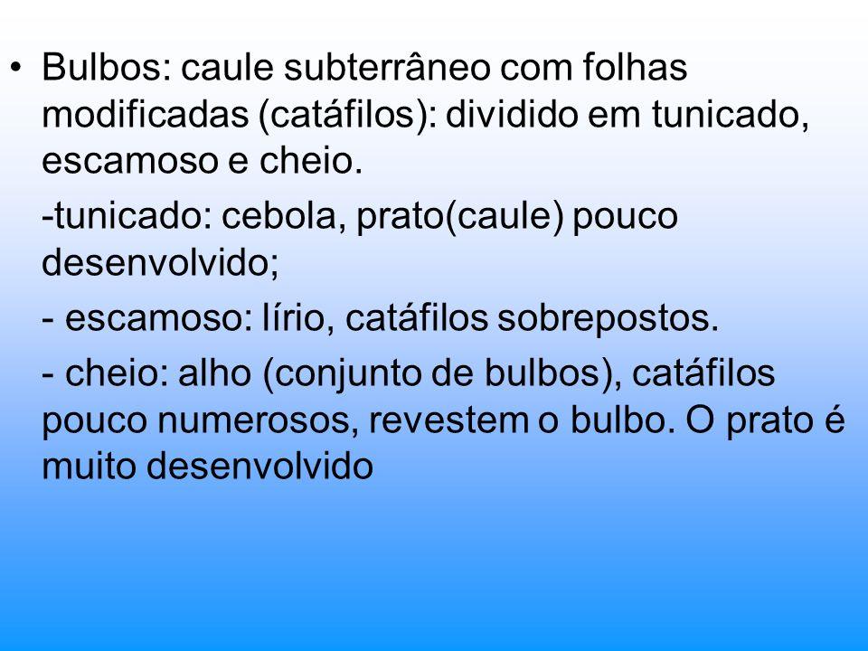 Bulbos: caule subterrâneo com folhas modificadas (catáfilos): dividido em tunicado, escamoso e cheio. -tunicado: cebola, prato(caule) pouco desenvolvi