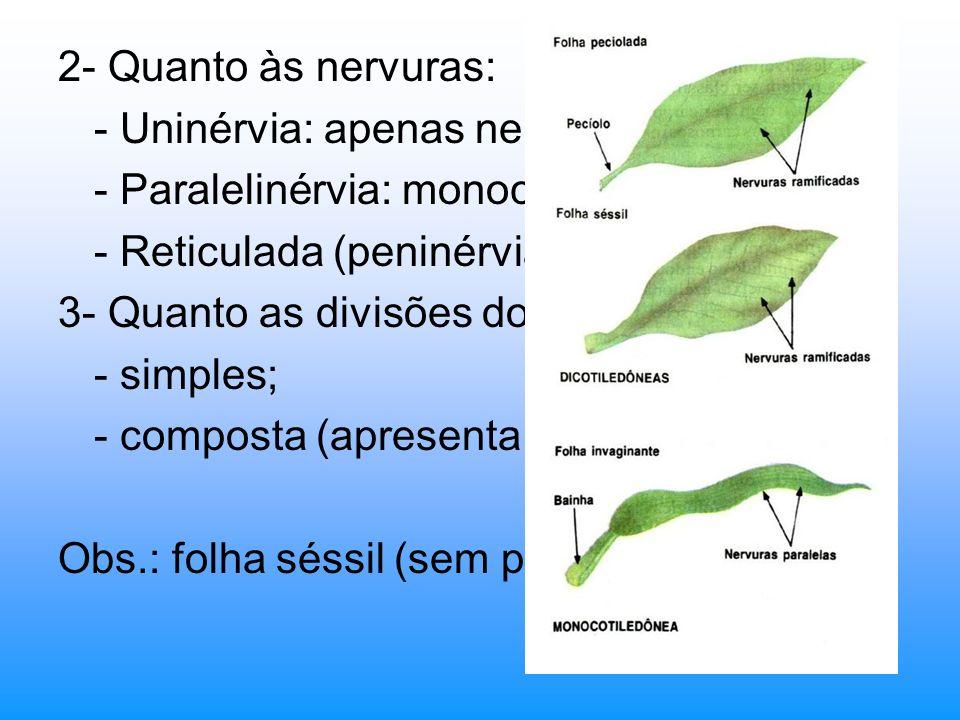 2- Quanto às nervuras: - Uninérvia: apenas nervura principal. - Paralelinérvia: monocotiledôneas; - Reticulada (peninérvia): angiospermas; 3- Quanto a