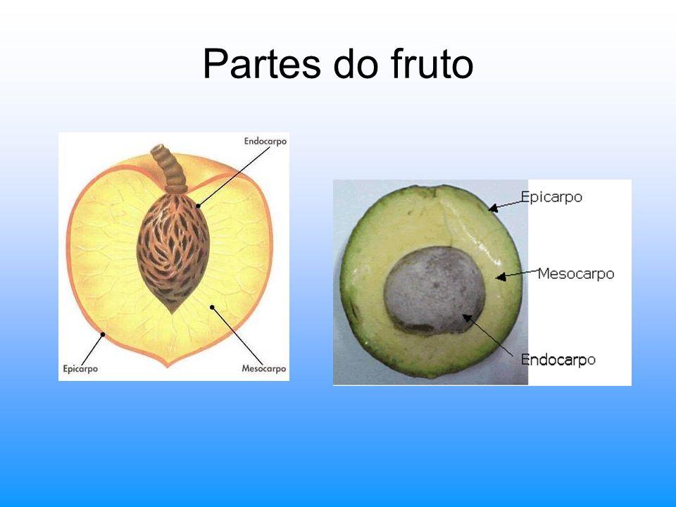 Partes do fruto