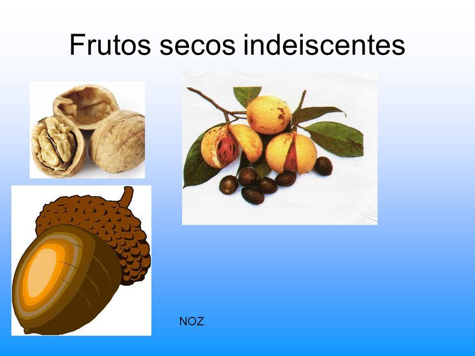 Frutos secos indeiscentes NOZ