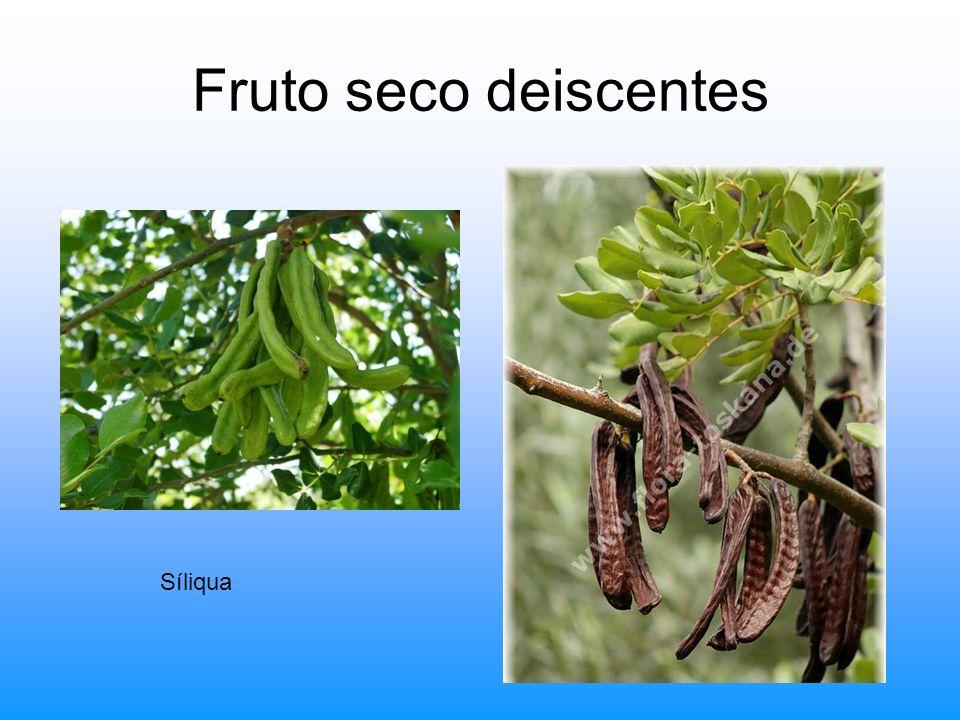 Fruto seco deiscentes Síliqua
