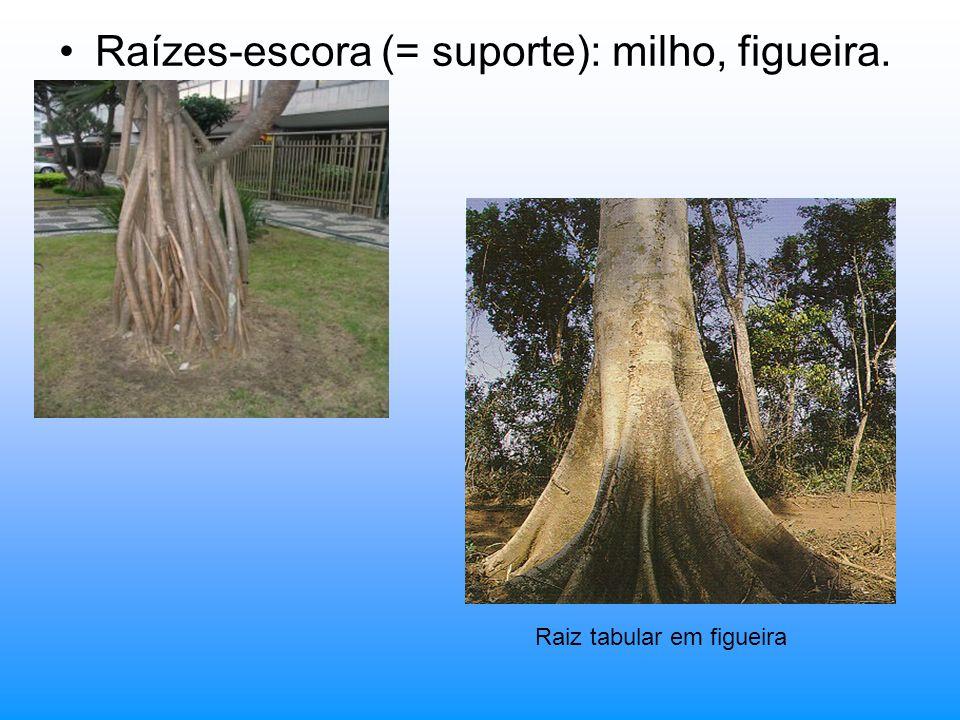 PSEUDOFRUTOS Receptáculo e/ou pedúnculo floral que desenvolveram; Podem ser: A) Simples: originados de uma única flor com um único carpelo; ex.: maçã, pêra e caju.