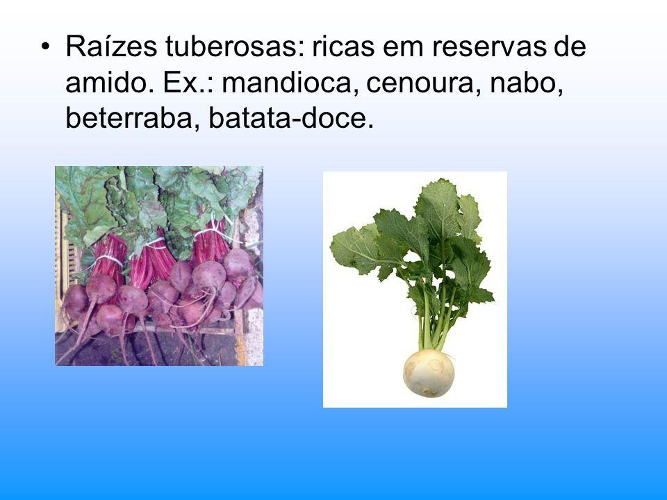 Raízes tuberosas: ricas em reservas de amido. Ex.: mandioca, cenoura, nabo, beterraba, batata-doce.