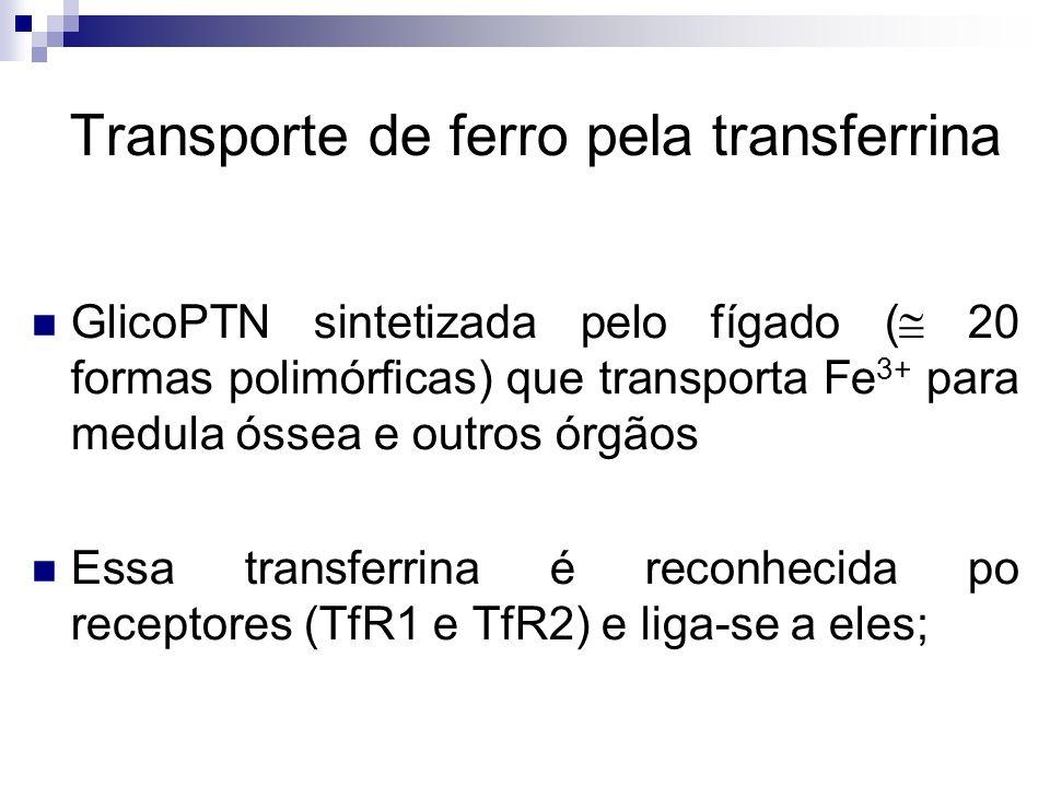 Transporte de ferro pela transferrina GlicoPTN sintetizada pelo fígado ( 20 formas polimórficas) que transporta Fe 3+ para medula óssea e outros órgão