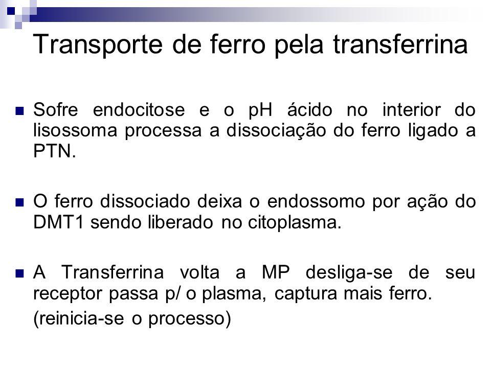 Transporte de ferro pela transferrina Sofre endocitose e o pH ácido no interior do lisossoma processa a dissociação do ferro ligado a PTN. O ferro dis