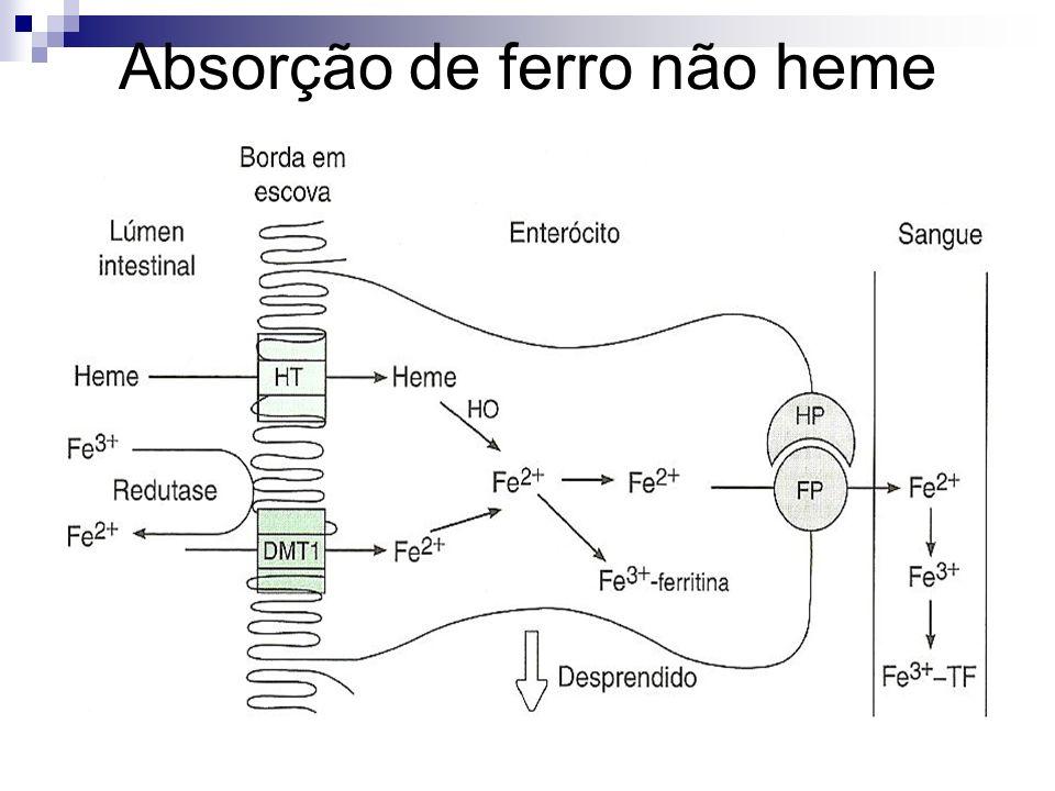 Etapas 1.O ferro chega sob a forma de Fe 3+ e é reduzido a Fe 2+ pela ação da ferri-redutase.