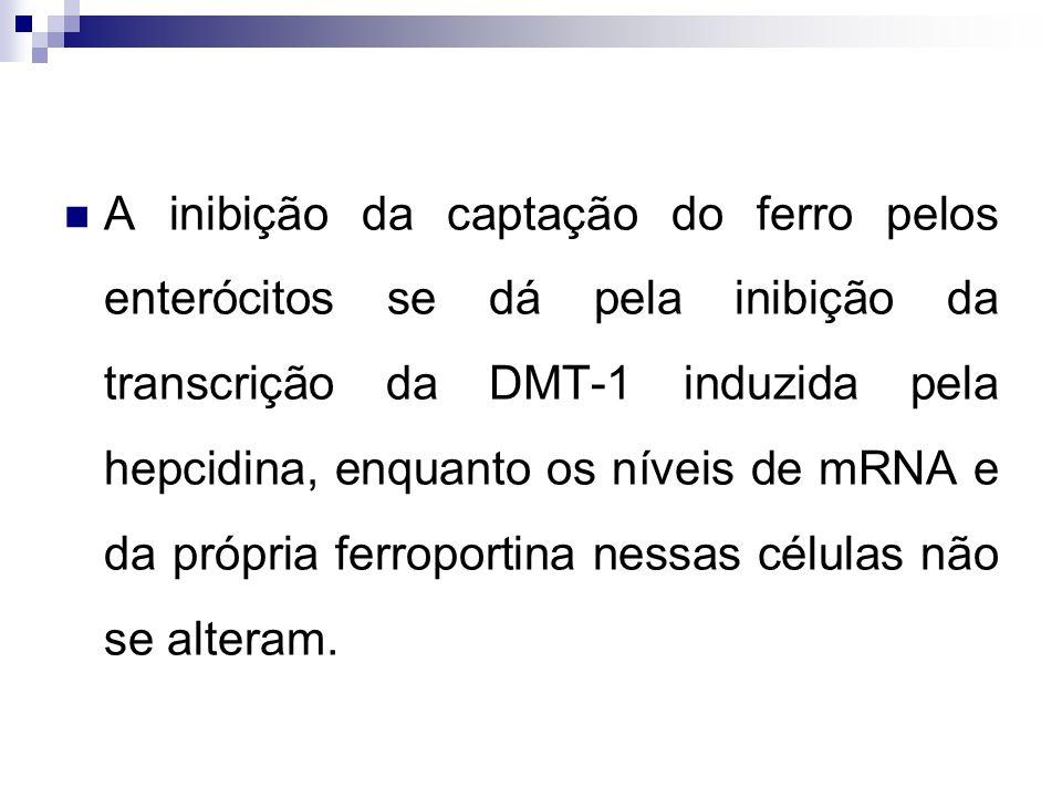 A inibição da captação do ferro pelos enterócitos se dá pela inibição da transcrição da DMT-1 induzida pela hepcidina, enquanto os níveis de mRNA e da