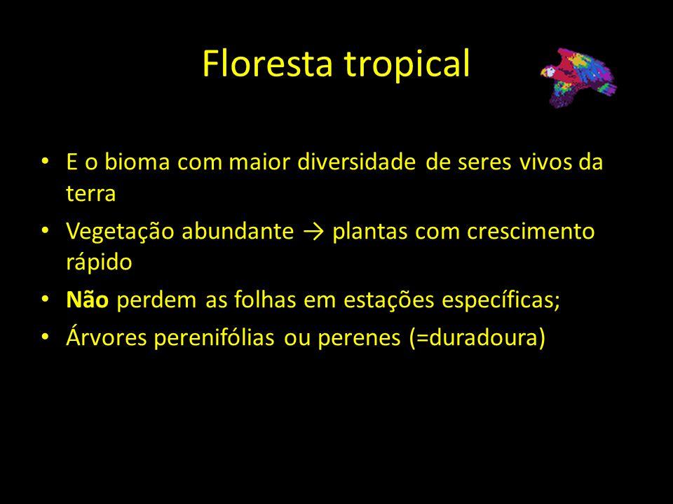 Floresta tropical E o bioma com maior diversidade de seres vivos da terra Vegetação abundante plantas com crescimento rápido Não perdem as folhas em e