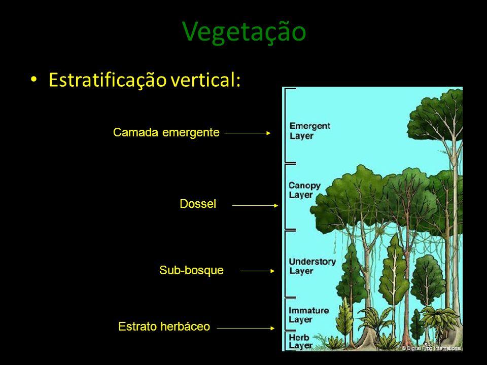 Vegetação Estratificação vertical: Camada emergente Dossel Sub-bosque Estrato herbáceo