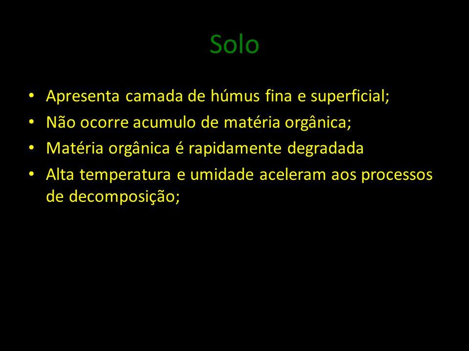 Solo Apresenta camada de húmus fina e superficial; Não ocorre acumulo de matéria orgânica; Matéria orgânica é rapidamente degradada Alta temperatura e