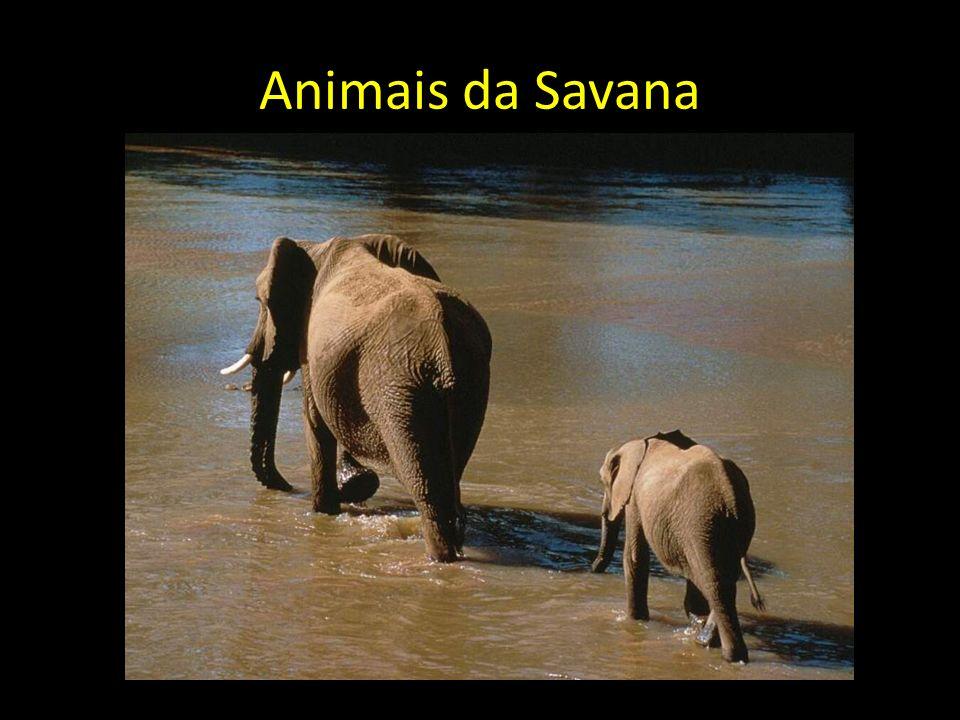 Animais da Savana