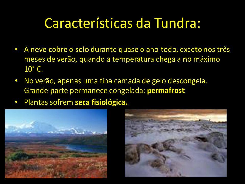 Características da Tundra: A neve cobre o solo durante quase o ano todo, exceto nos três meses de verão, quando a temperatura chega a no máximo 10° C.