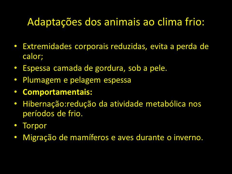 Adaptações dos animais ao clima frio: Extremidades corporais reduzidas, evita a perda de calor; Espessa camada de gordura, sob a pele. Plumagem e pela