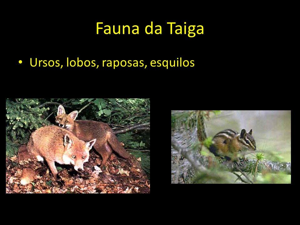 Fauna da Taiga Ursos, lobos, raposas, esquilos