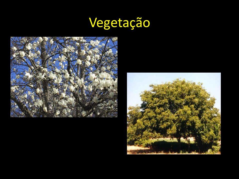 Vegetação Magnólia Nogueira