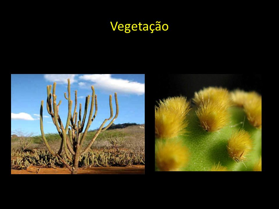 Vegetação -Cactáceas