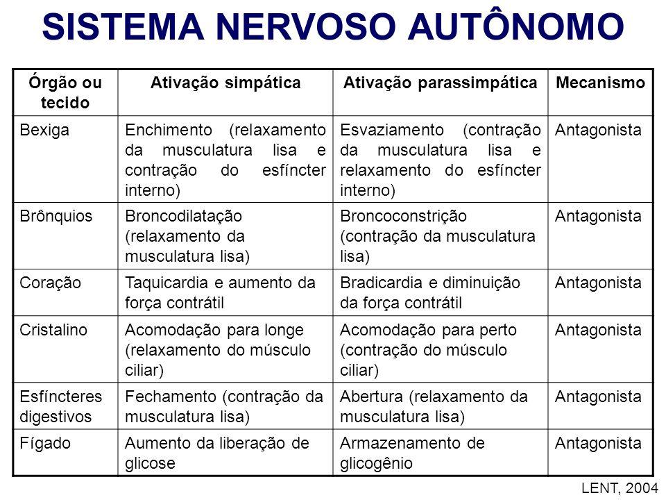 Órgão ou tecido Ativação simpáticaAtivação parassimpáticaMecanismo BexigaEnchimento (relaxamento da musculatura lisa e contração do esfíncter interno)