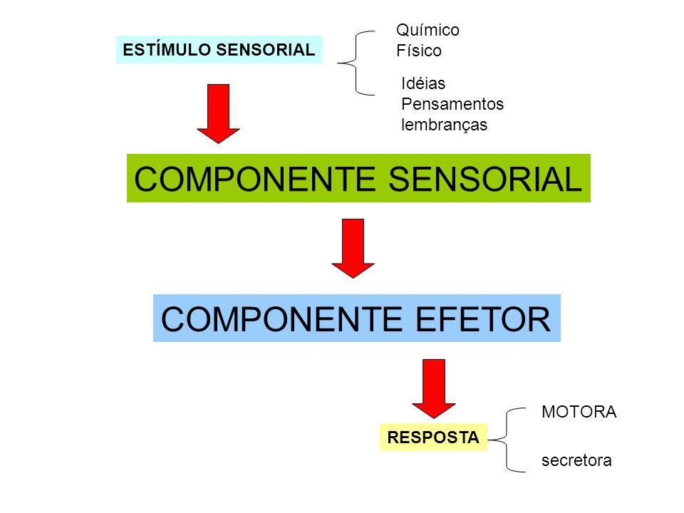 COMPONENTE SENSORIAL COMPONENTE EFETOR ESTÍMULO SENSORIAL RESPOSTA Químico Físico Idéias Pensamentos lembranças MOTORA secretora