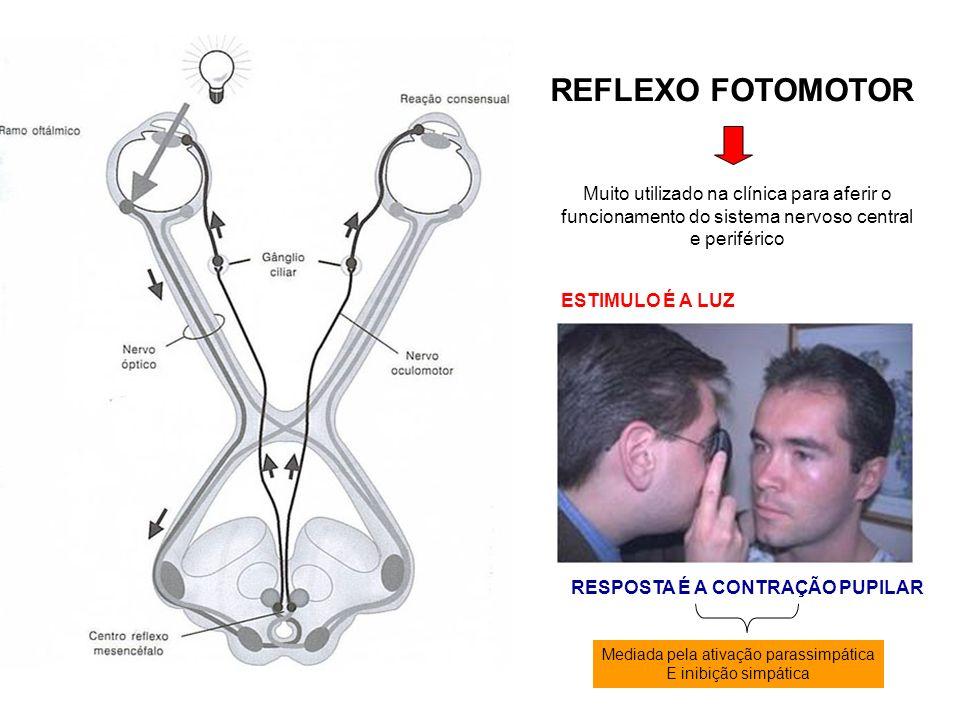 REFLEXO FOTOMOTOR Muito utilizado na clínica para aferir o funcionamento do sistema nervoso central e periférico ESTIMULO É A LUZ RESPOSTA É A CONTRAÇ