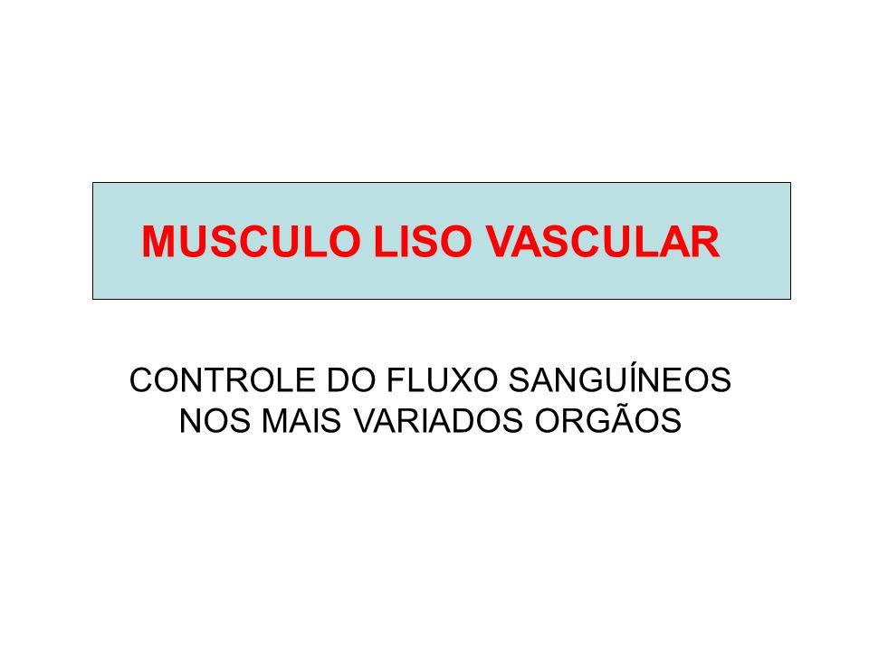 MUSCULO LISO VASCULAR CONTROLE DO FLUXO SANGUÍNEOS NOS MAIS VARIADOS ORGÃOS