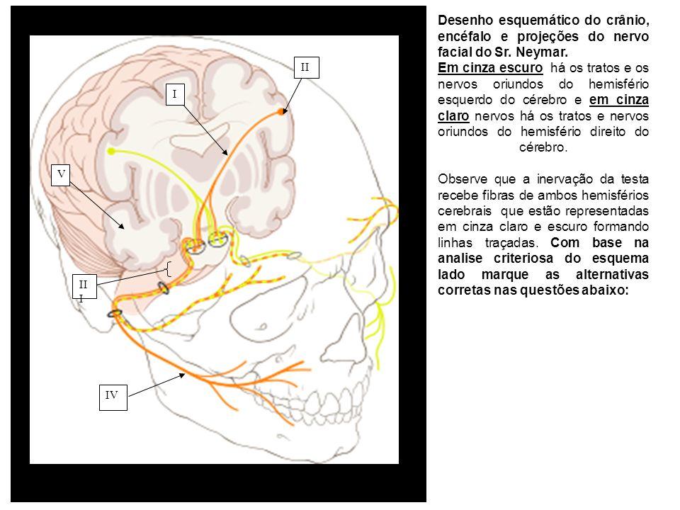 III IV II I V Desenho esquemático do crânio, encéfalo e projeções do nervo facial do Sr. Neymar. Em cinza escuro há os tratos e os nervos oriundos do