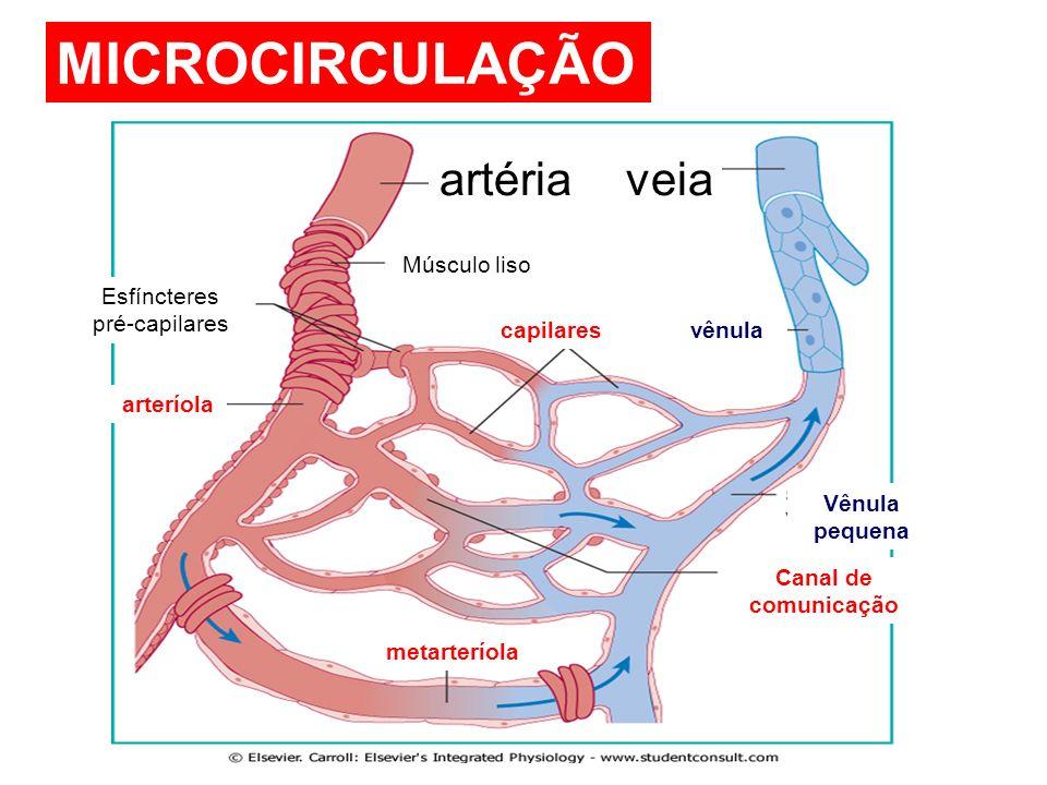 MICROCIRCULAÇÃO veiaartéria Músculo liso Esfíncteres pré-capilares arteríola vênulacapilares metarteríola Vênula pequena Canal de comunicação