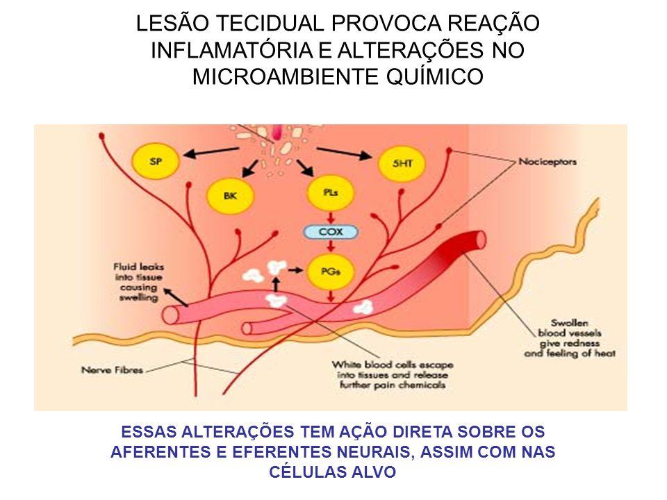 LESÃO TECIDUAL PROVOCA REAÇÃO INFLAMATÓRIA E ALTERAÇÕES NO MICROAMBIENTE QUÍMICO ESSAS ALTERAÇÕES TEM AÇÃO DIRETA SOBRE OS AFERENTES E EFERENTES NEURA