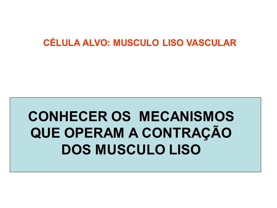 CONHECER OS MECANISMOS QUE OPERAM A CONTRAÇÃO DOS MUSCULO LISO CÉLULA ALVO: MUSCULO LISO VASCULAR