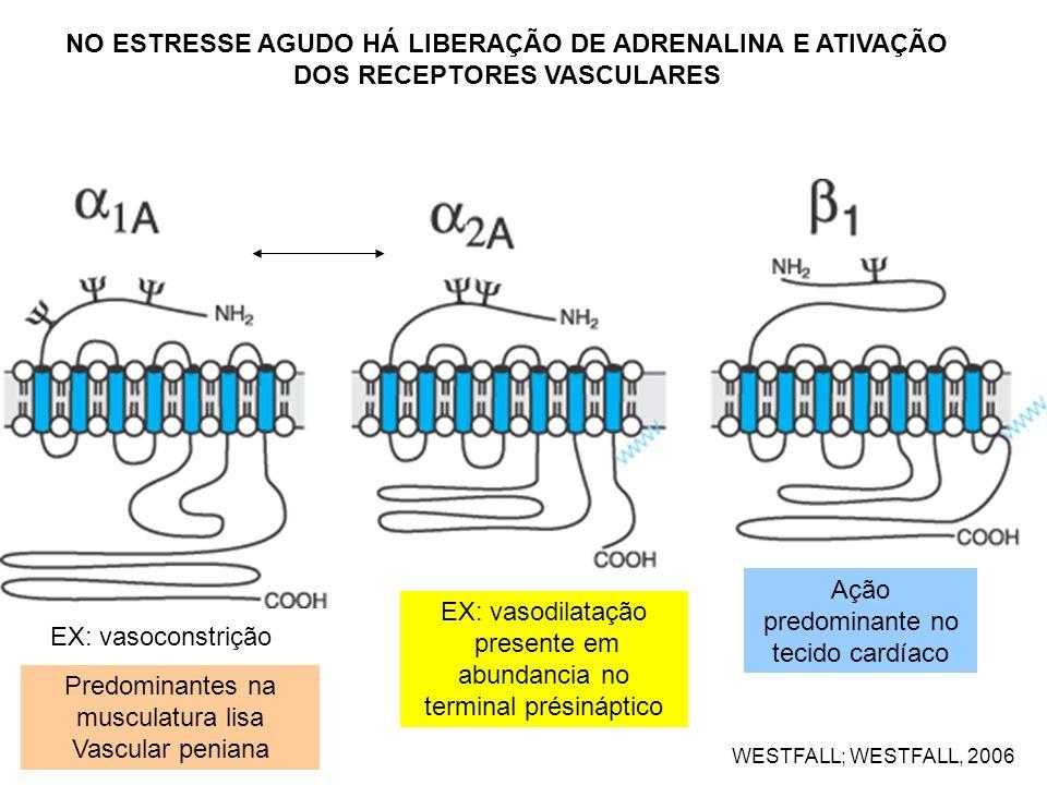 WESTFALL; WESTFALL, 2006 EX: vasoconstrição EX: vasodilatação presente em abundancia no terminal présináptico Ação predominante no tecido cardíaco NO