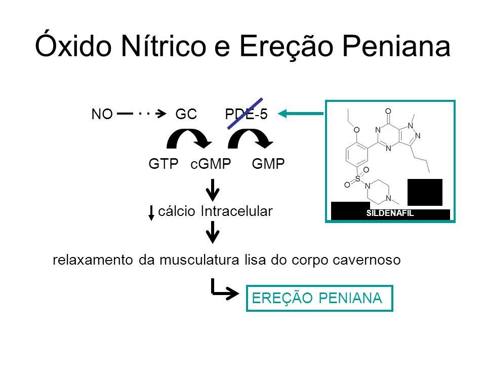 Óxido Nítrico e Ereção Peniana relaxamento da musculatura lisa do corpo cavernoso GTPcGMP cálcio Intracelular EREÇÃO PENIANA GMP PDE-5GCNO SILDENAFIL