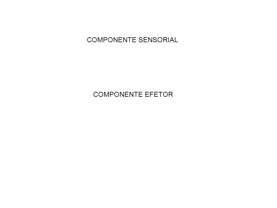 COMPONENTE SENSORIAL COMPONENTE EFETOR
