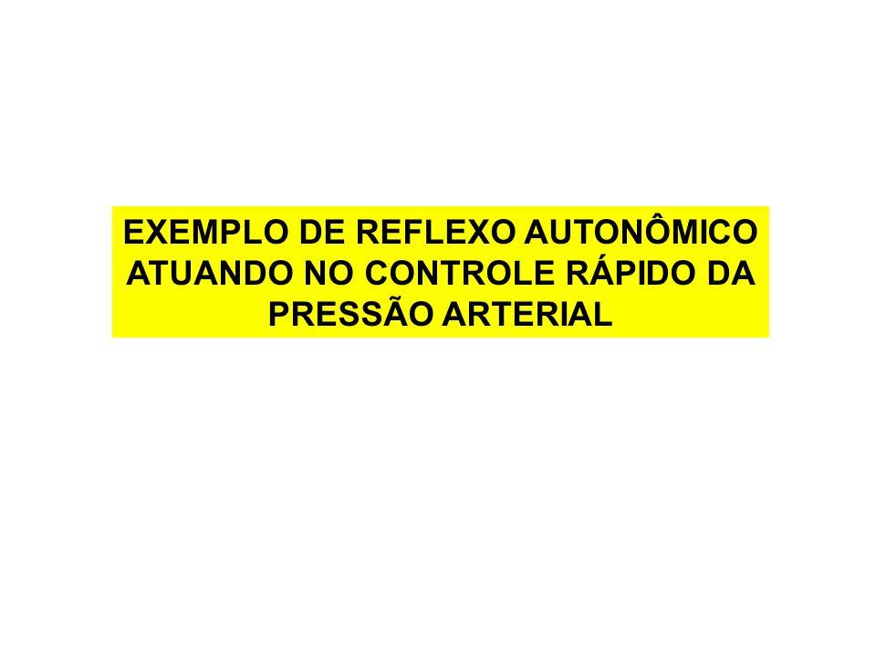 EXEMPLO DE REFLEXO AUTONÔMICO ATUANDO NO CONTROLE RÁPIDO DA PRESSÃO ARTERIAL