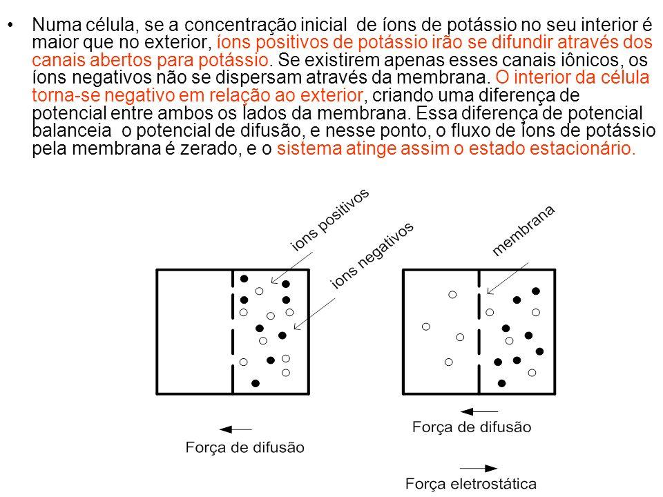 Numa célula, se a concentração inicial de íons de potássio no seu interior é maior que no exterior, íons positivos de potássio irão se difundir atravé