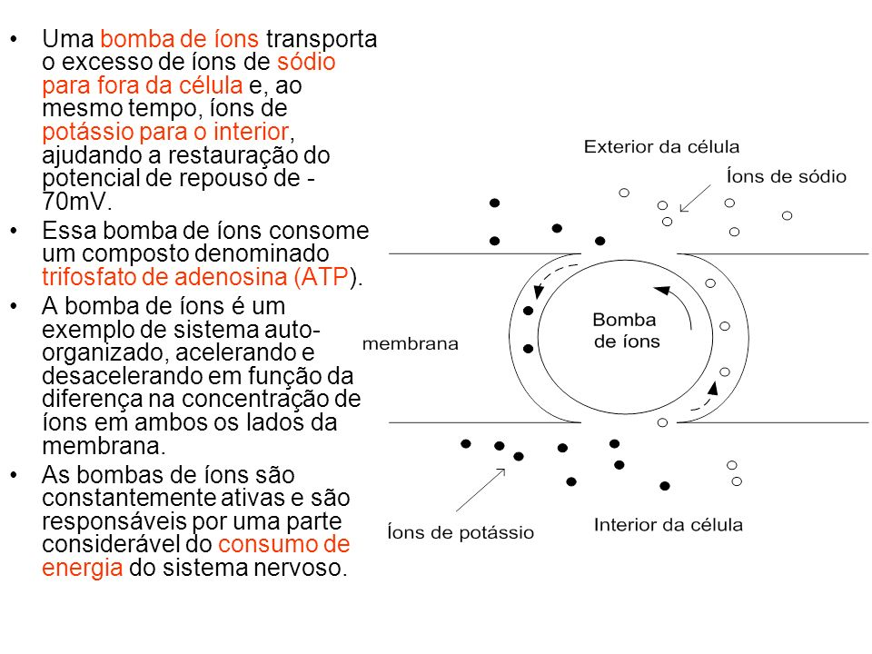 Uma bomba de íons transporta o excesso de íons de sódio para fora da célula e, ao mesmo tempo, íons de potássio para o interior, ajudando a restauraçã