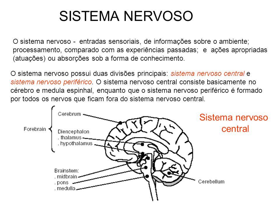 O sistema nervoso - entradas sensoriais, de informações sobre o ambiente; processamento, comparado com as experiências passadas; e ações apropriadas (
