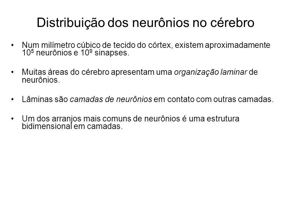 Distribuição dos neurônios no cérebro Num milímetro cúbico de tecido do córtex, existem aproximadamente 10 5 neurônios e 10 9 sinapses. Muitas áreas d