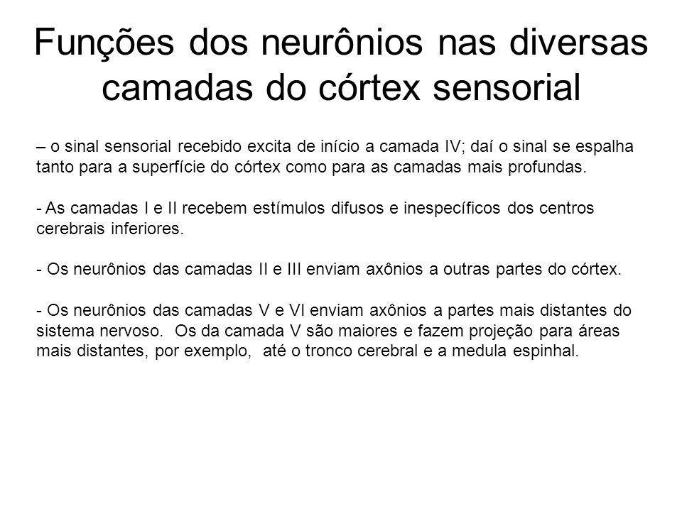 Observações psicológicas permitem verificar grau de plasticidade dos neurônios.