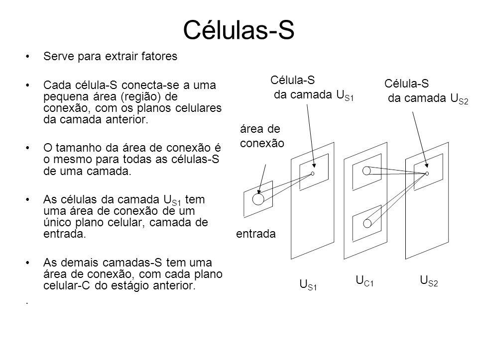 Células-S Serve para extrair fatores Cada célula-S conecta-se a uma pequena área (região) de conexão, com os planos celulares da camada anterior. O ta