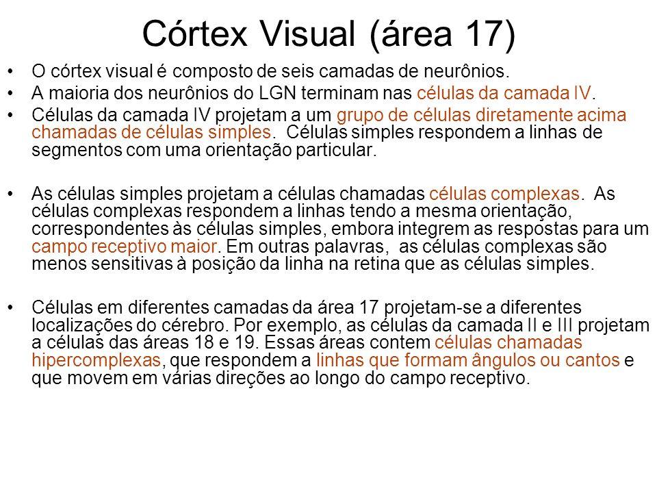 Córtex Visual (área 17) O córtex visual é composto de seis camadas de neurônios. A maioria dos neurônios do LGN terminam nas células da camada IV. Cél