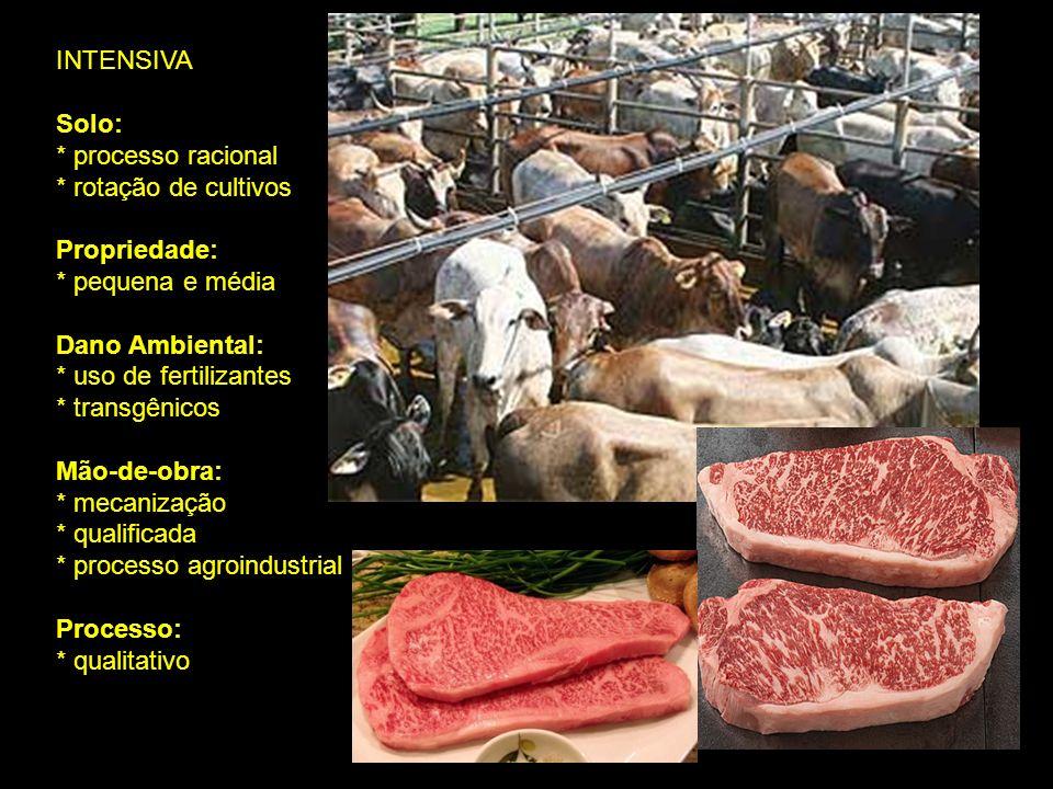 INTENSIVA Solo: * processo racional * rotação de cultivos Propriedade: * pequena e média Dano Ambiental: * uso de fertilizantes * transgênicos Mão-de-