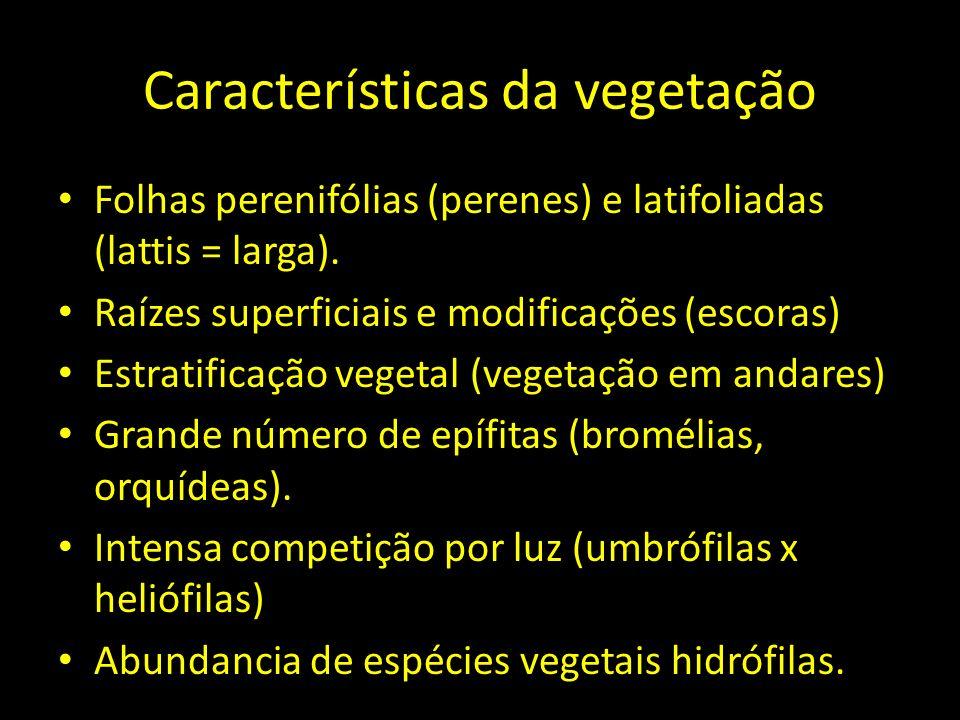 Características da vegetação Folhas perenifólias (perenes) e latifoliadas (lattis = larga). Raízes superficiais e modificações (escoras) Estratificaçã