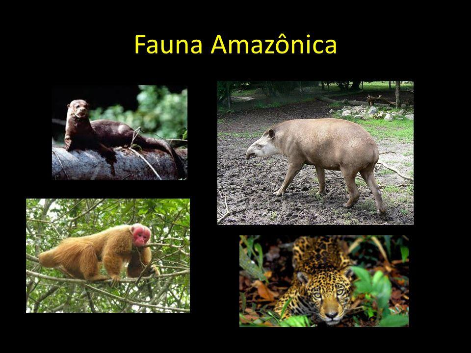 Fauna Amazônica