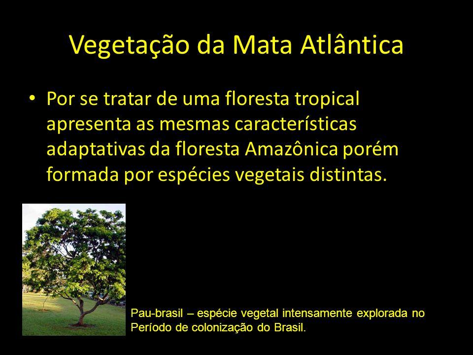 Vegetação da Mata Atlântica Por se tratar de uma floresta tropical apresenta as mesmas características adaptativas da floresta Amazônica porém formada