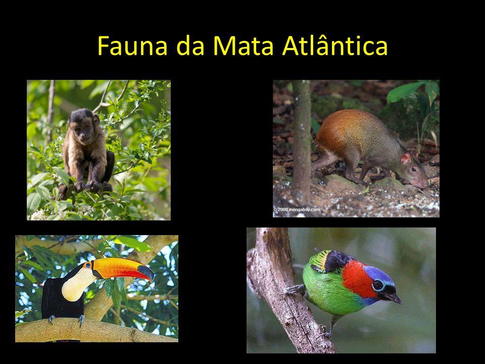 Fauna da Mata Atlântica